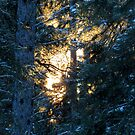 Sun's Rays Through The Trees by MaeBelle