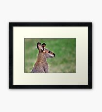 Wallaby.... Framed Print