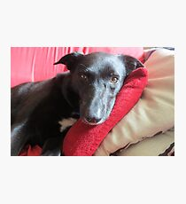 Jessie The Dog Photographic Print