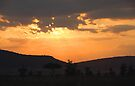 Sunset in the Serengeti by Carole-Anne