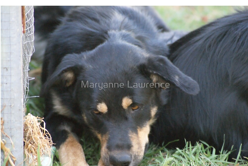 Max by Maryanne Lawrence
