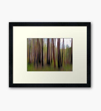 Colours of The Bush Framed Print
