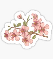 Pink sakura Sticker