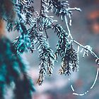 Frozen Pine Branches by Milan Surbatovic