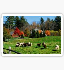 Sheep Farm in the Vermont Countryside Sticker