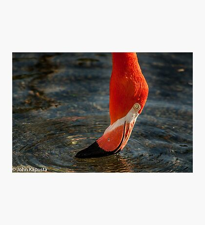 Time for A Drink!  Photographic Print