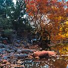 Fall Colors on Beaver Creek, Sedona Arizona by photosbyflood
