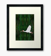 American White Ibis In Flight Framed Print
