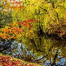 Autumn colors by © Kira Bodensted