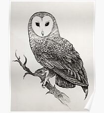 Detailed Owl Poster