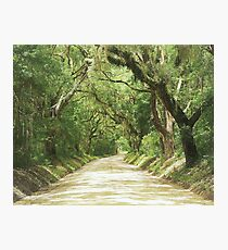 Edisto Lane Photographic Print