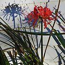 Spider Lily In Shadow by WildestArt