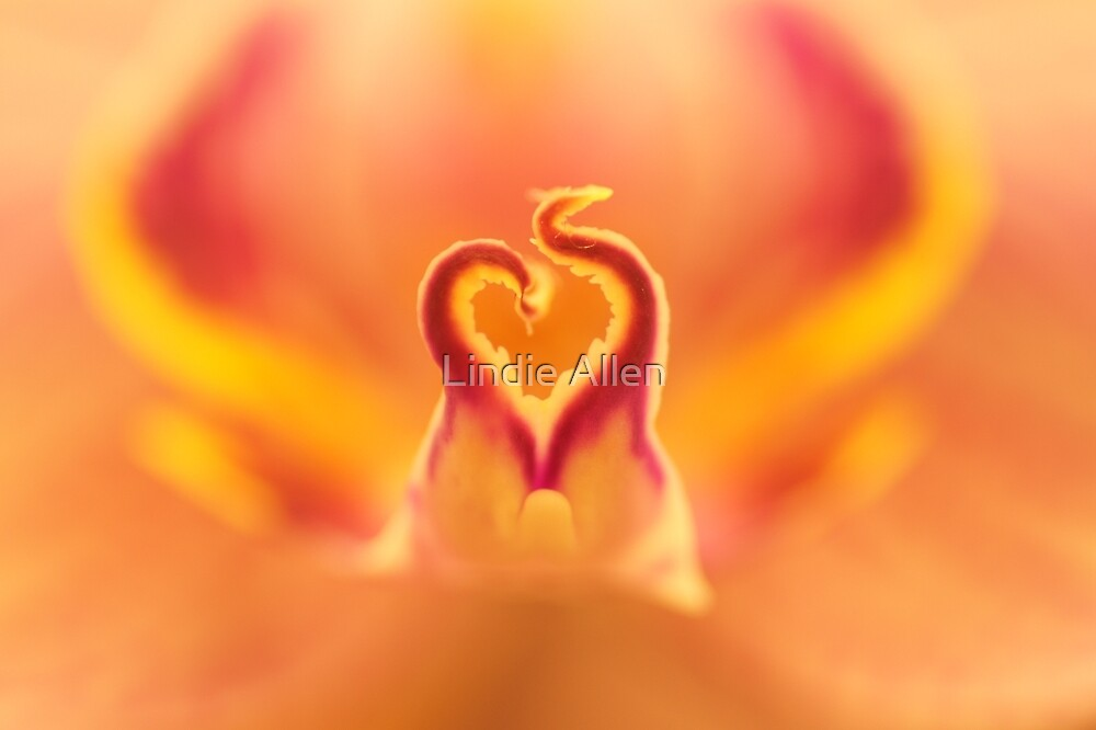 Flaming heart by Lindie Allen