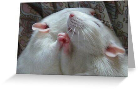 Ratten von KawaiiCaps