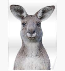 Cute baby kangaroo Poster
