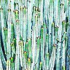 Lost Cactus #redbubble #decor #buyart by Uma Gokhale