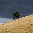 Tree on a hill by Joel Bramley