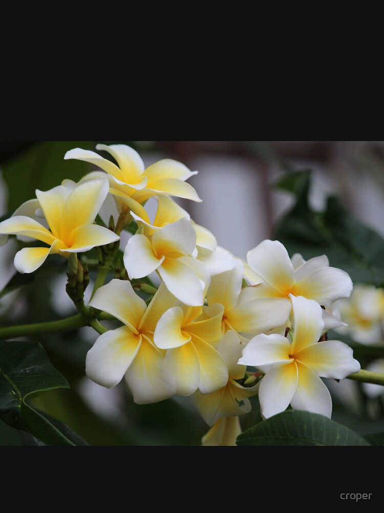 Beautiful Tropical Flowers 1 by croper
