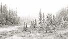Algonquin Ice - Algonquin Park, Canada by Jim Cumming