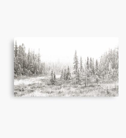 Algonquin Ice - Algonquin Park, Canada Metal Print