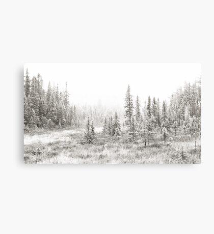 Algonquin Ice - Algonquin Park, Canada Canvas Print