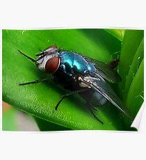 Fly : Blue Bottle Poster
