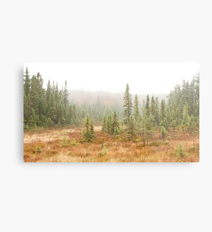 Fog in Algonquin Park, Canada Metal Print