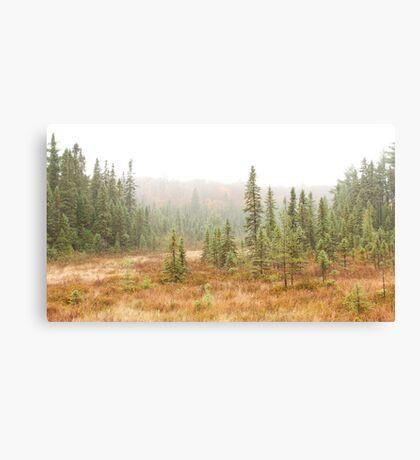 Fog in Algonquin Park, Canada Canvas Print