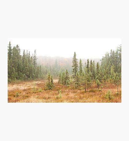 Fog in Algonquin Park, Canada Photographic Print