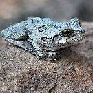 Tree Frog by Sheri Nye
