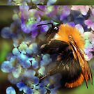 Fuzzy Bee by saleire