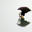 Eagle Reflection (Enhanced) by klziegler