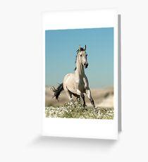 beautiful stallion Greeting Card