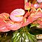 *AVATAR-Anthurium Flower - Gorgeous Flower Cards*