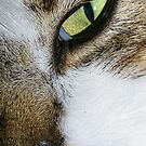 Cat eye by flashcompact