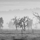 Misty Morn B&W by Michelle Cocking