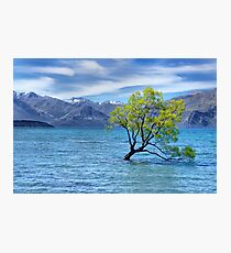 New Zealand Landscape 7 Photographic Print