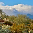 Desert Scape by Barbara  Brown