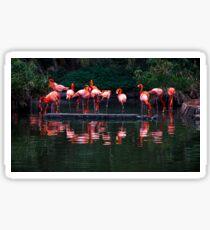 Pink Pelicans  Sticker