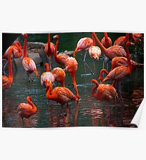 Pink Pelicans  Poster