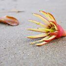 Beach Flower by GumLeaf