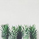 Pineapple Leaves by Cassia Beck