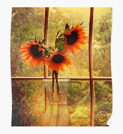 Sunflowers in September Poster