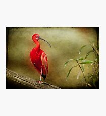 Show off! Photographic Print