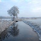 Tree reflection in Winter by ienemien