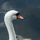Swan song by ABGPhotography