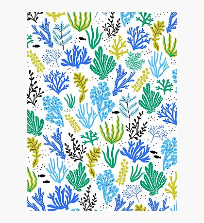 Marine life, seaweed illustration Photographic Print