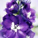 Delphinium Magic Fountains by Lissywitch