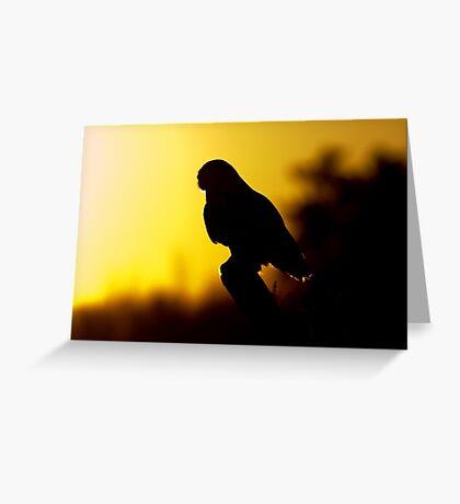 Night Owl - Snowy Owl Greeting Card