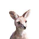 Kleiner Känguru von Amy Hamilton